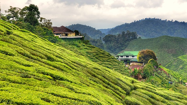 why i love malaysia From its multiculturalism to its natural wonders, here are 15 reasons to visit malaysia, the heart of southeast asia.