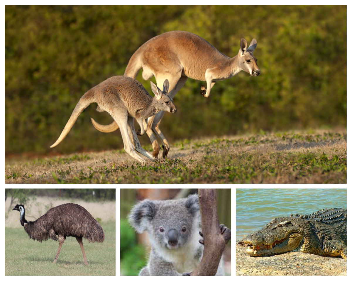 Highlights From A Year In Australia Global Gallivanting