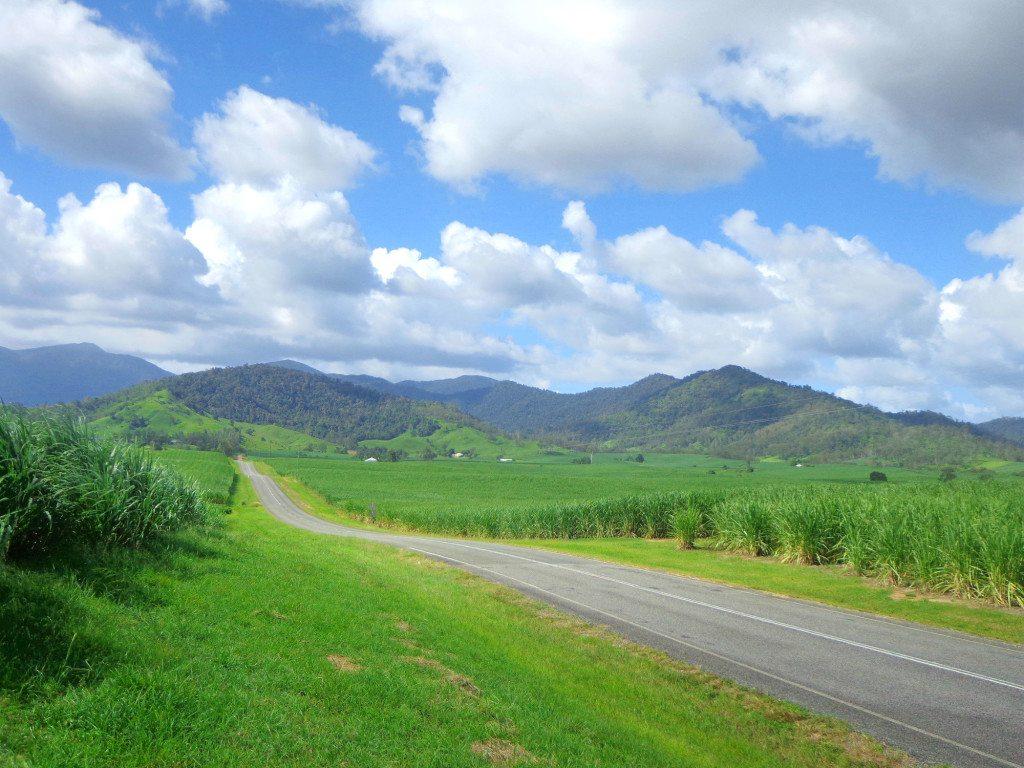 pioneer valley sugar cane