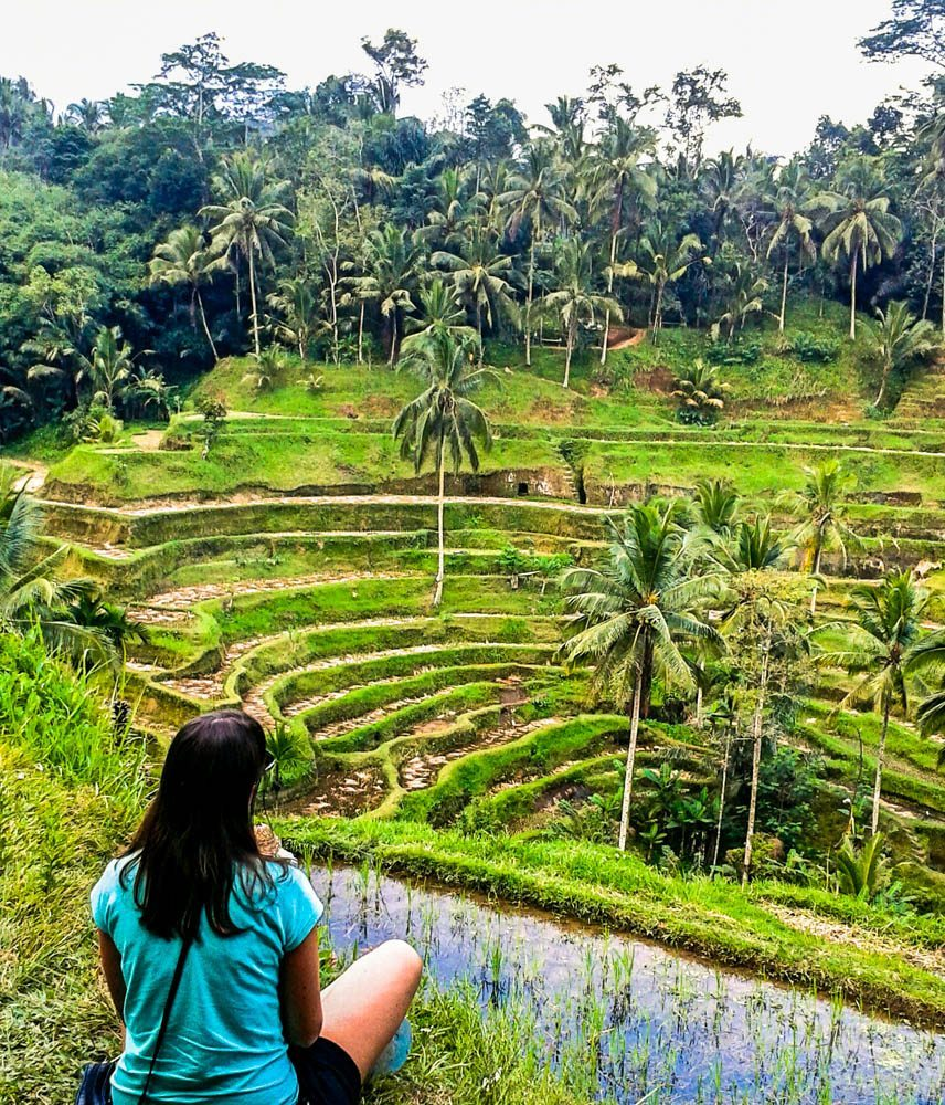 rice fields back