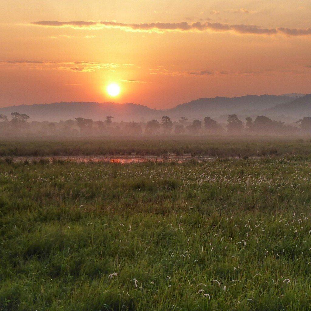 sunrise in Kaziranga National Park, Assam,