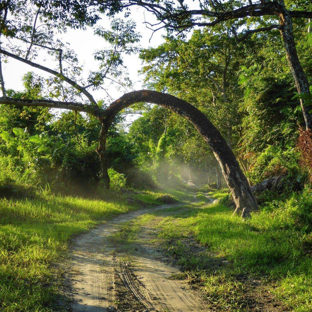 Driving through the jungle in Kaziranga National Park