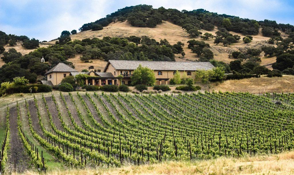 vineyard-1096841_1280
