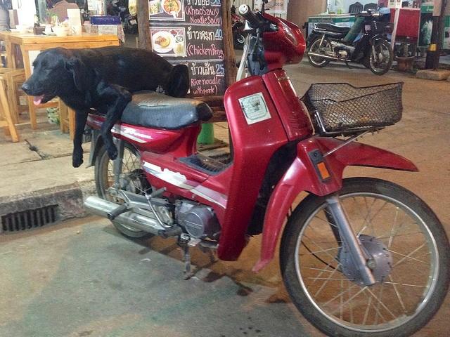 Motorike in Pai. Photo credit Flickr